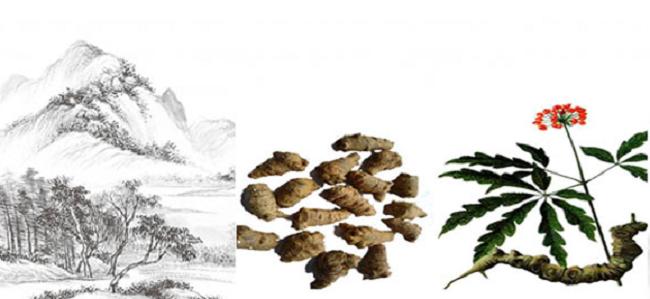 Thành phần từ các thảo mộc thiên nhiên